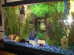 Background Ideas for Your Fish Tank