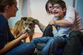 How Therapy Pets Can Help Those with Mental Health Issues