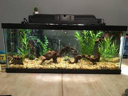 Keeping a Healthy Tank: Things to Look Out for