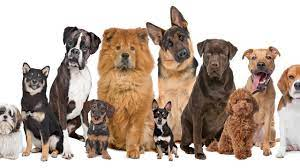 Top Ten Therapy Dog Breeds